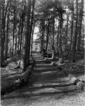tn_woods.jpg