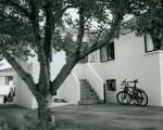 Bikes-and-a-tree.jpg