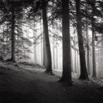 Cardrona_Forest_001.jpg