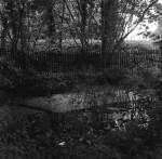 Jenny_Green_fingers_pond.jpg