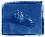 pineconesnail-sm.jpg