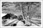 Abandoned_Farmhouse_Print_scan.jpg