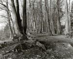 woodland-_2.jpg