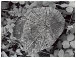 stump-and-leaves.jpg