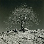 ribblehead_tree_800.jpg