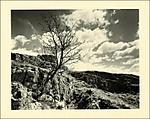 treerock1.jpg