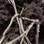 38-LD-Broken-Tree1.jpg