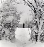 39-MF-Winter-Wonderland.jpg