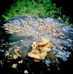 Holga-fungi.jpg