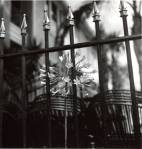 Fence_And_Flower_-_New_Orleans_LowRes.jpg