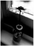 Flower-on-a-sill.jpg