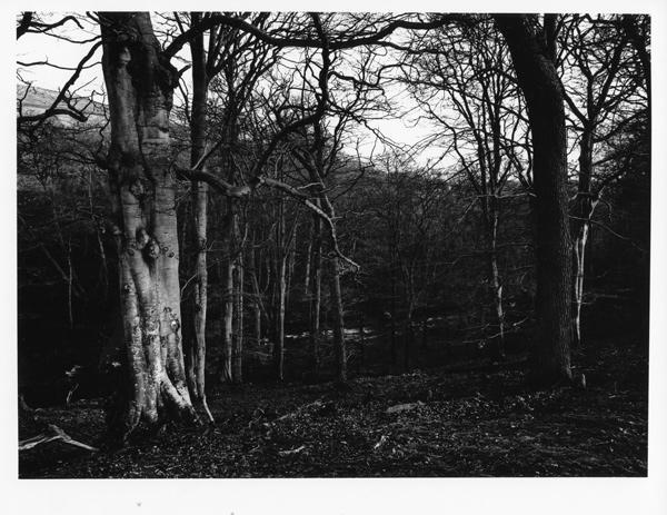 web-FADU-59---Woods_-Stanhope-Burn