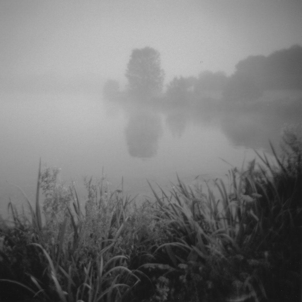 Misty Morning Gardens