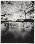 web_of_trees.jpg