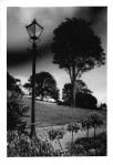 PE_R117_Jan_2020_WoS_Border_tree_and_lampost.JPG